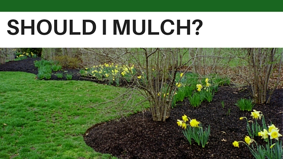 To Mulch, or Not to Mulch? – that is the question!