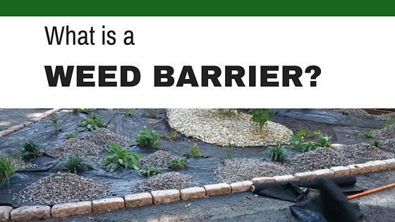 What is a Weed Barrier?