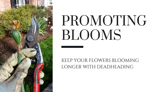 How to Keep Your Flowers Blooming Longer