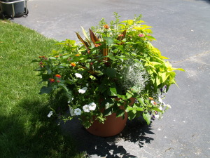 """A container of colorful annuals makes for a great """"Welcome!"""" by any enterance."""