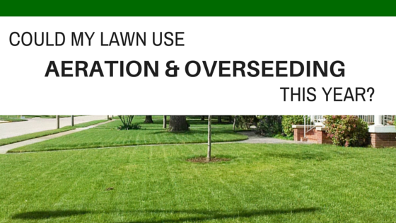 Could my Lawn Use Aeration and Overseeding this Year?