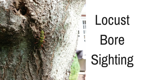 Locust Bore Sighting!