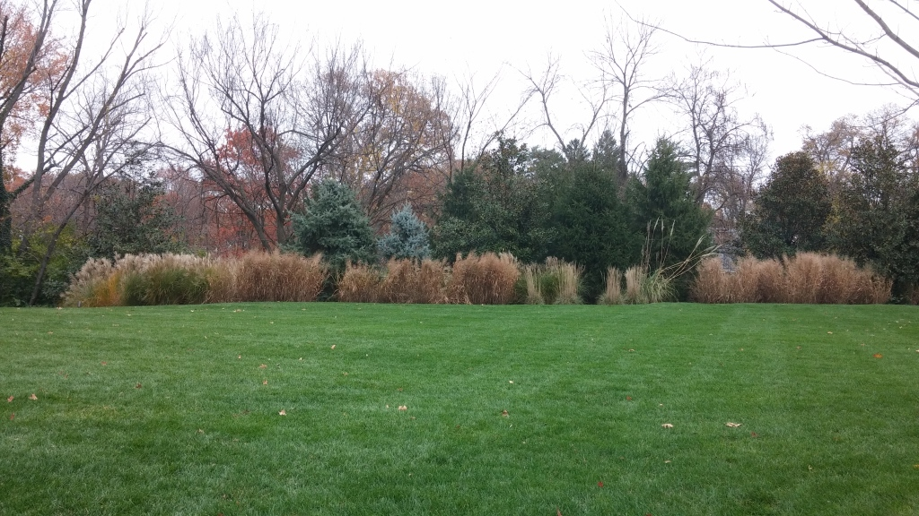 A variety of ornamental grasses providing erosion control and seasonal interest along the back border of a property.