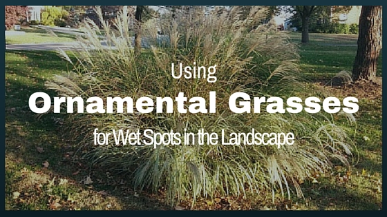 Ornamental Grasses for Wet Spots