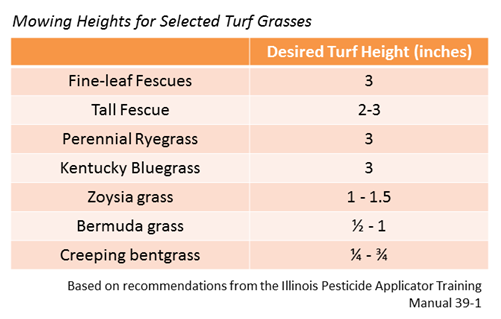 Recommended Mowing Heights for Selected Turf Grasses
