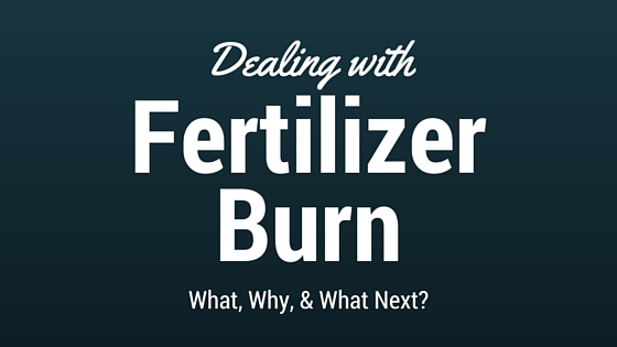 Surviving Fertilizer Burn
