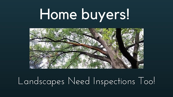 Home Buyers – Landscapes Need Inspections Too!
