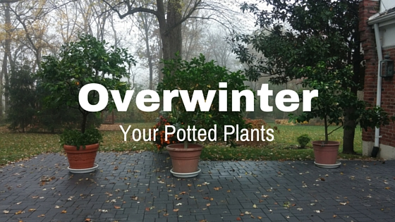 Overwinter your Potted Plants!