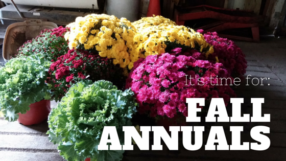Adding Fall Color to the Landscape with Annuals