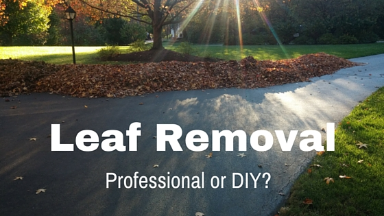 Should you Remove your Leaves Professionally?