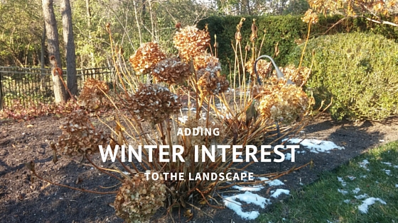 Building Winter Interest in the Landscape