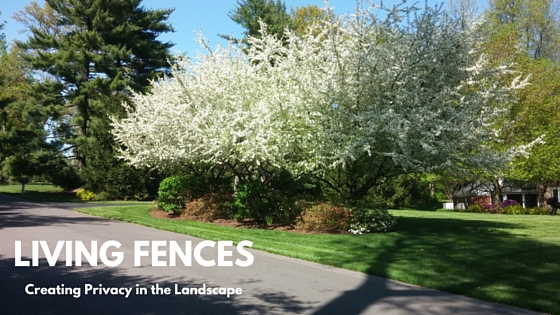 Living Fences – Creating Privacy in the Landscape