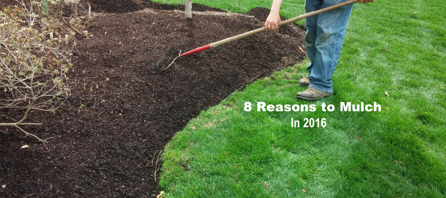 8 Reasons You Should Mulch in 2016
