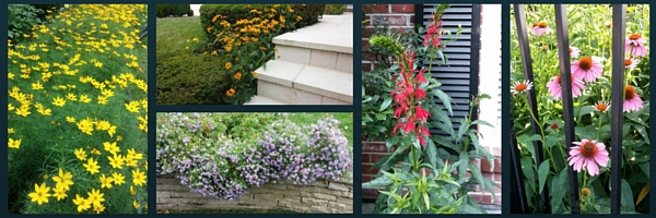 Some of our favorite perennials that feed the bees!