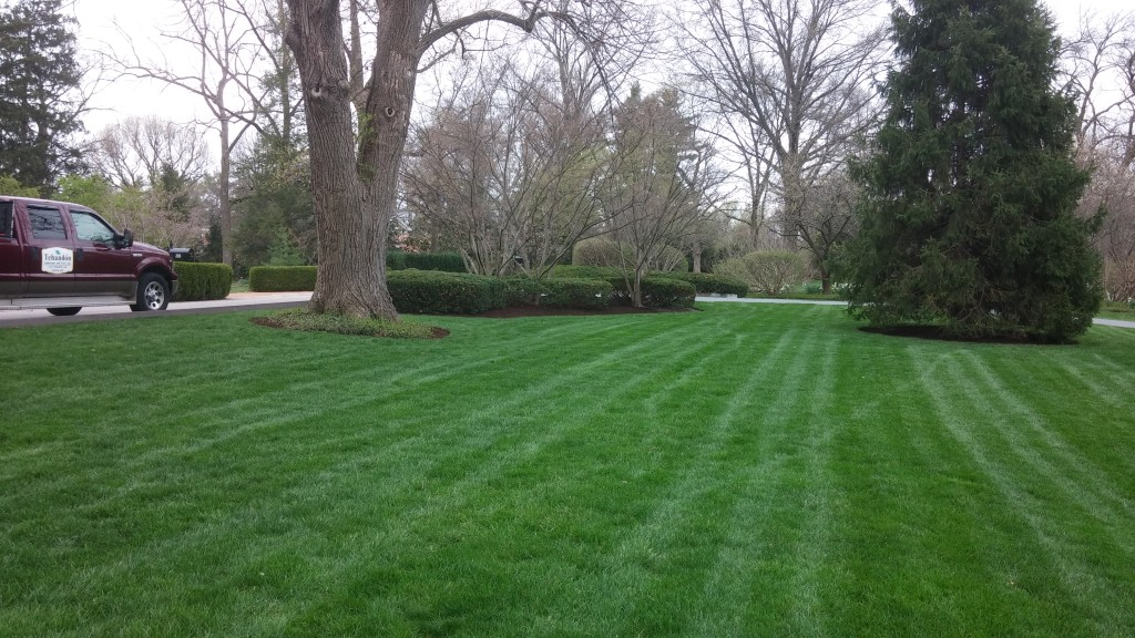 Spring lawn care - a little maintenance in spring to create a lush lawn in summer.